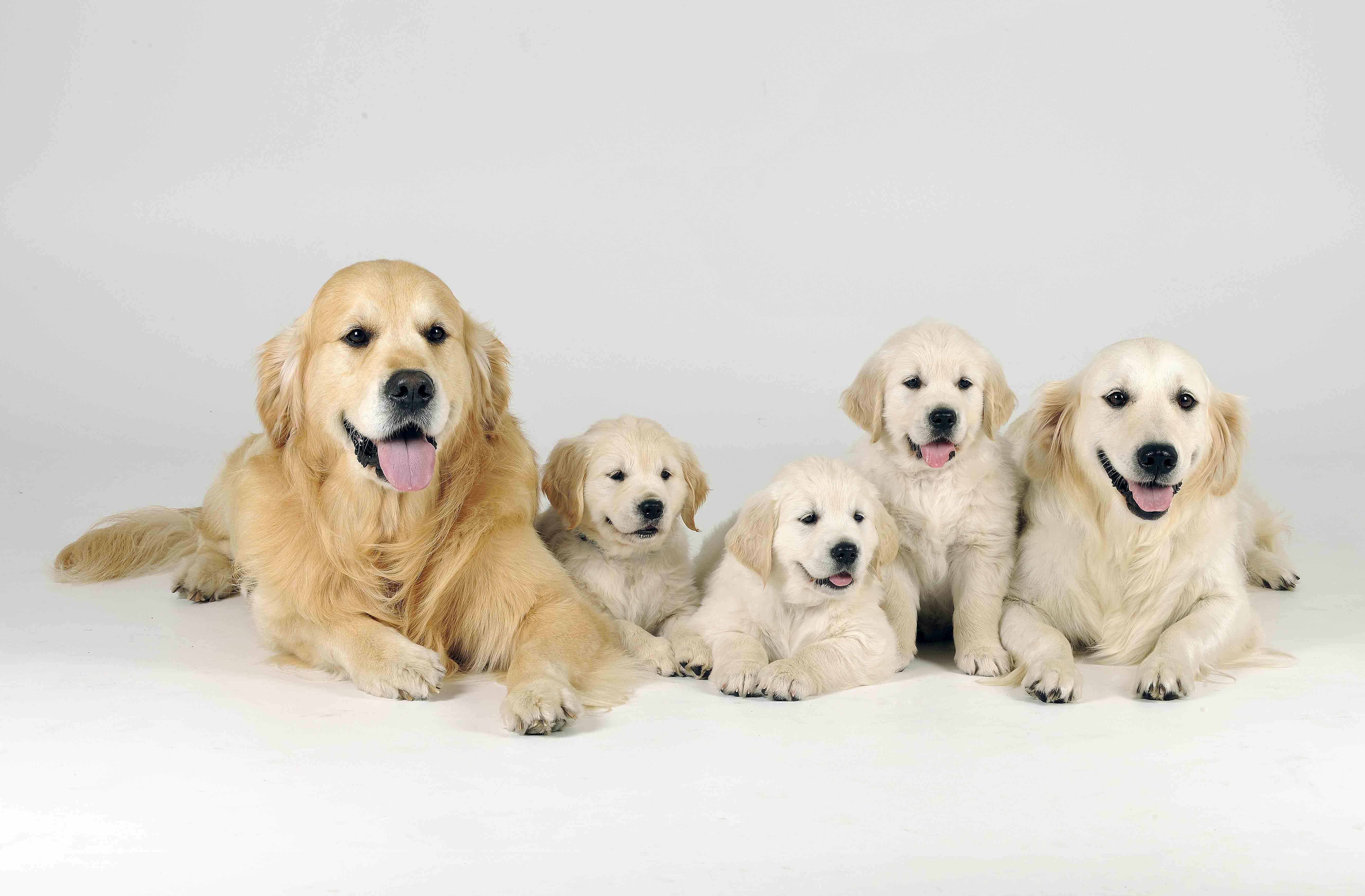 dino-met-pups