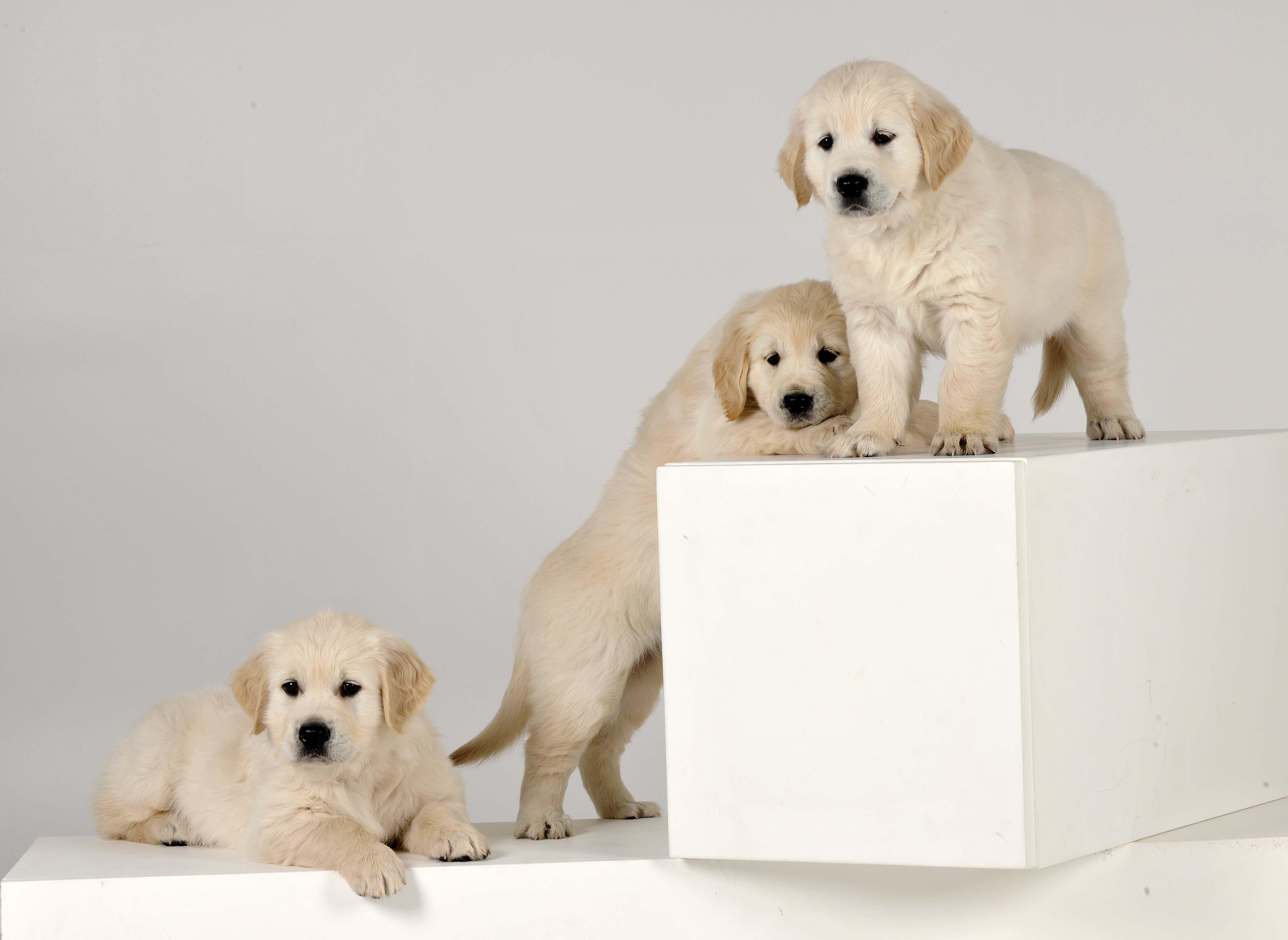 pups van  Dino
